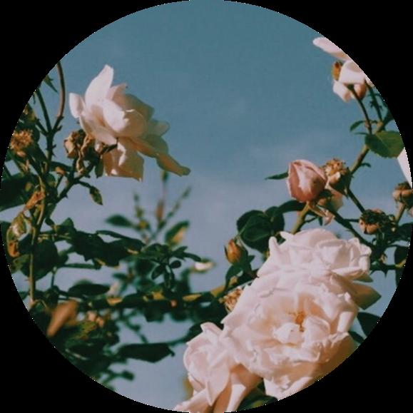 White Aesthetic Icon Plants Flowers Profile Pic Pfp Pic