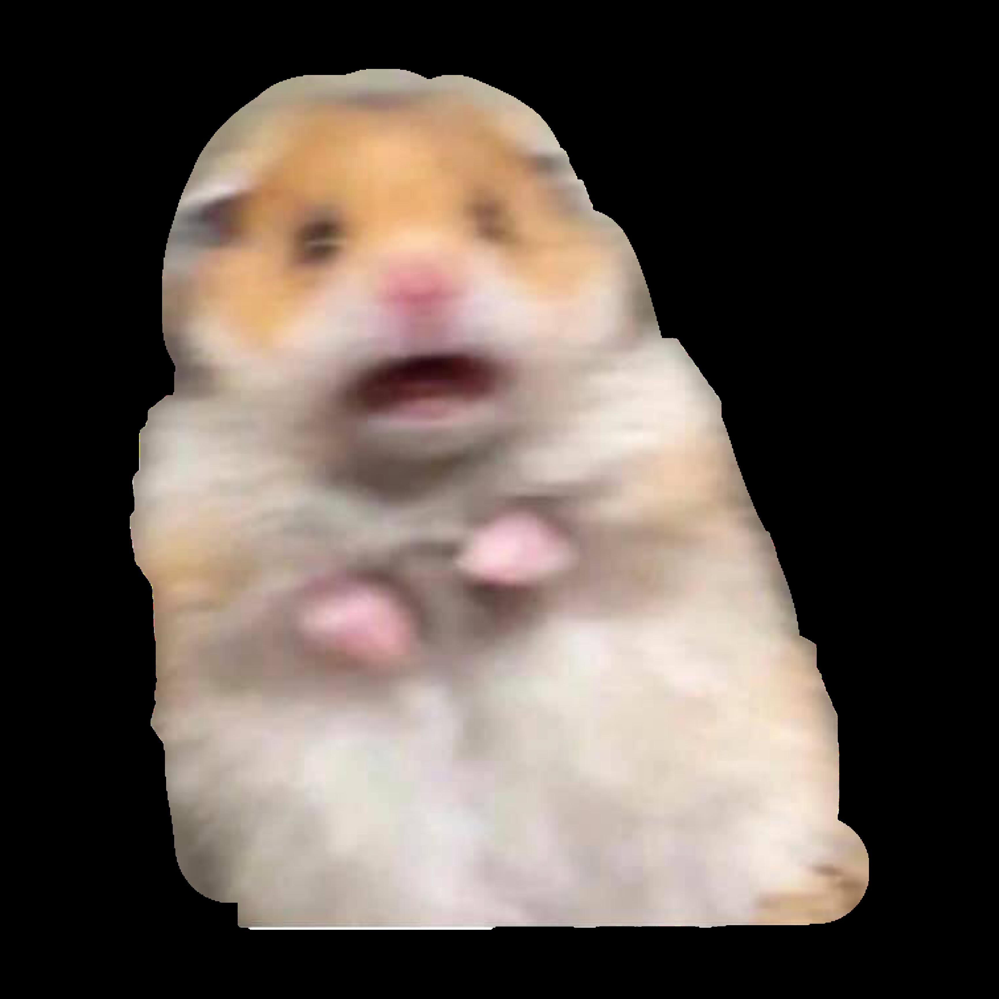 Hamster meme