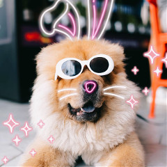 It's,time,to,'hop,to,it'!,In,this,Challenge,,we,want,to,see,how,you,best,incorporate,our,bunny,ears,sticker,to,your,favorite,edit,,an,easy,way,to,give,your,image,an,super-cute,touch.