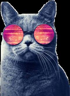 cat catwithglasses