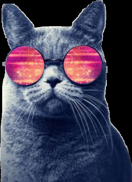 #cat #catwithglasses