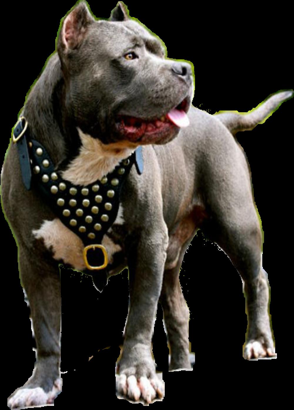 Best Dog Breeda For Ill Peopel