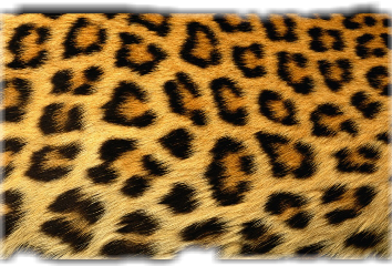 fur freetoedit