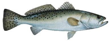fish freetoedit
