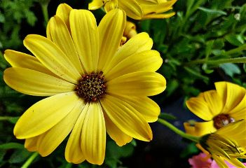 photography flowers nature emotions yellow freetoedit