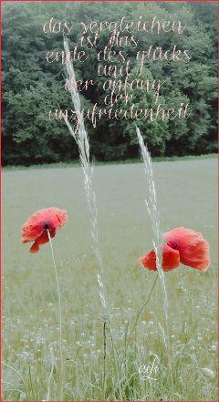 quotes nature postcard mohnblume naturephotography