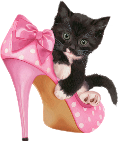 cat kitten katze freetoedit