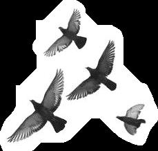birdstickers freetoedit