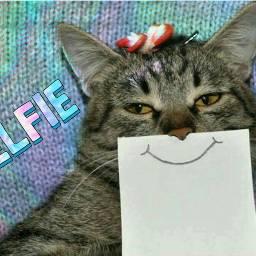 freetoedit holographicbackgrounds holographicoverlay cat selfiestickerremix