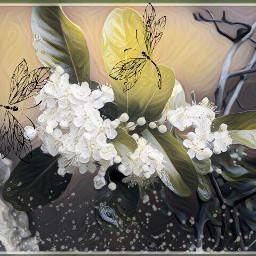 freetoedit myeditofmyphoto magiceffects calcomanias lovenature
