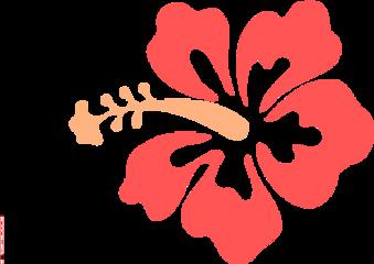 hibiscus flower freetoedit
