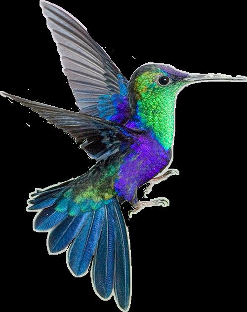 #hummingbird #purple #blue #green #freetoedit