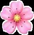 hoađào freetoedit hoa