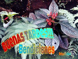 buenas bendiciones spiritualart byliriosbellos faith freetoedit