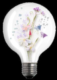 lightbulb flowers freetoedit