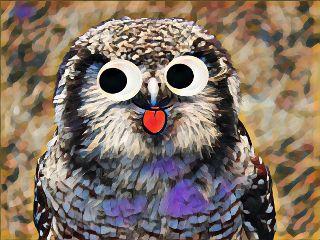 freetoedit owl stickers magiceffects geodeeffect