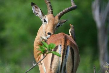freetoedit bird deer nature petsandanimals