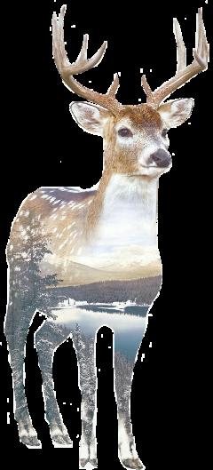 freetoedit deer
