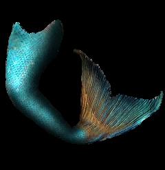 mermaidstail cauda sereia mermaid freetoedit