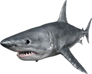 shark freetoedit