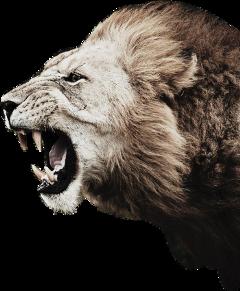 lion freetoedit