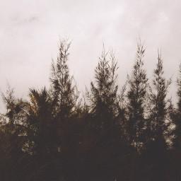 FreeToEdit pale photography