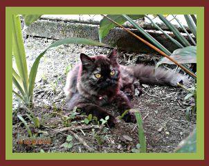 photography cat vladimira byliriosbellos fromcostarica