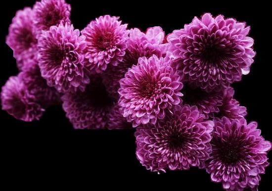 #flowers #FreeToEdit