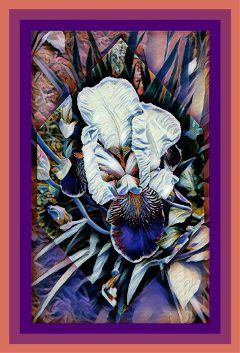 iris flower photography artistic shapemask