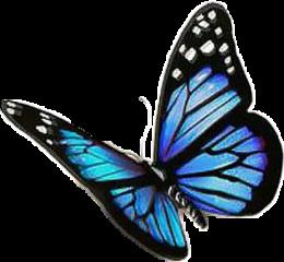mariposa freetoedit