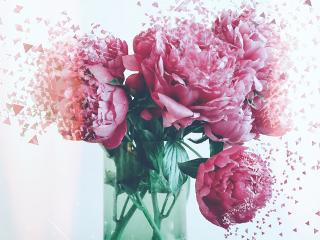 freetoedit dispersiontool flowers roses pink