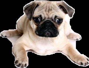 perro freetoedit