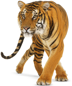tiger freetoedit fx specialeffects effects