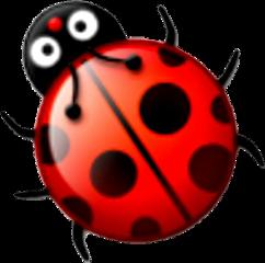 ladybug bug insect
