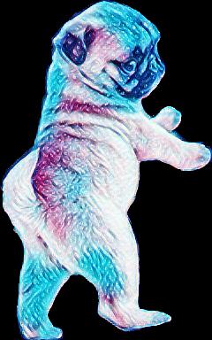 pugs freetoedit