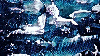 fish prisma picsart aquarium madewithpicsart