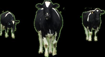 moo cow three freetoedit