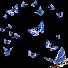 бабочки бабочка freetoedit