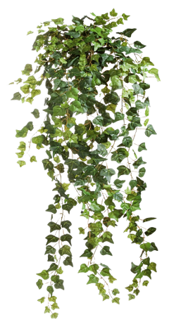 leaf plants freetoedit