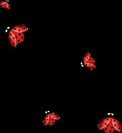 ladybugs freetoedit