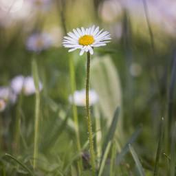 freetoedit flower rasht guilan iran