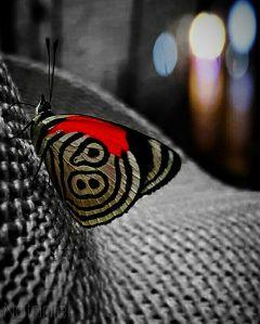 freetoedit bokeh blackandwhite buterfly