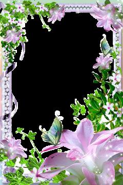 frame freetoedit