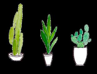 tumblr plants cacti