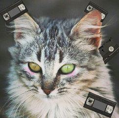 gatos hola freetoedit