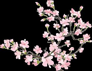 sakura flower cherryblossom pretty pink