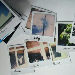 freetoedit photography polaroid instantphotos creative
