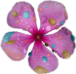 sticker flower colorful photography nature