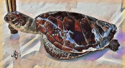 interesting summer turtle art