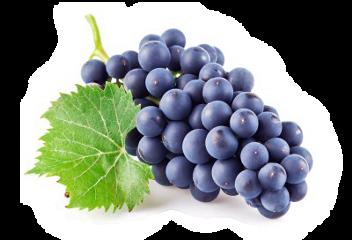 grapes freetoedit